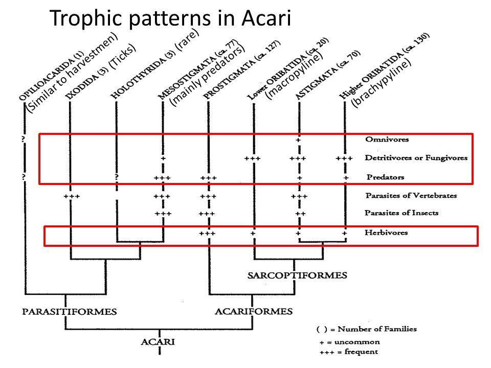 Trophic patterns in Acari (Ticks) (Similar to harvestmen) (rare) (macropyline) (brachypyline) (mainly predators)