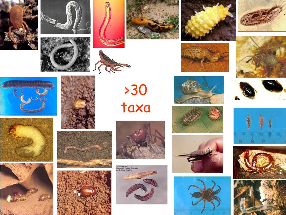 >30 taxa