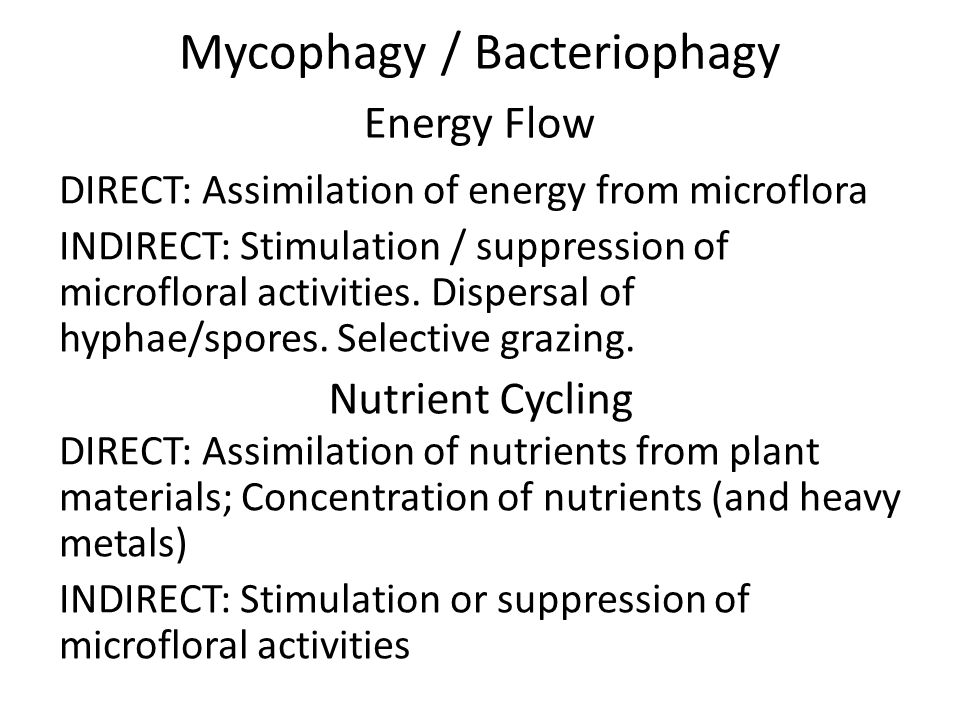 Mycophagy / Bacteriophagy Energy Flow DIRECT: Assimilation of energy from microflora INDIRECT: Stimulation / suppression of microfloral activities.