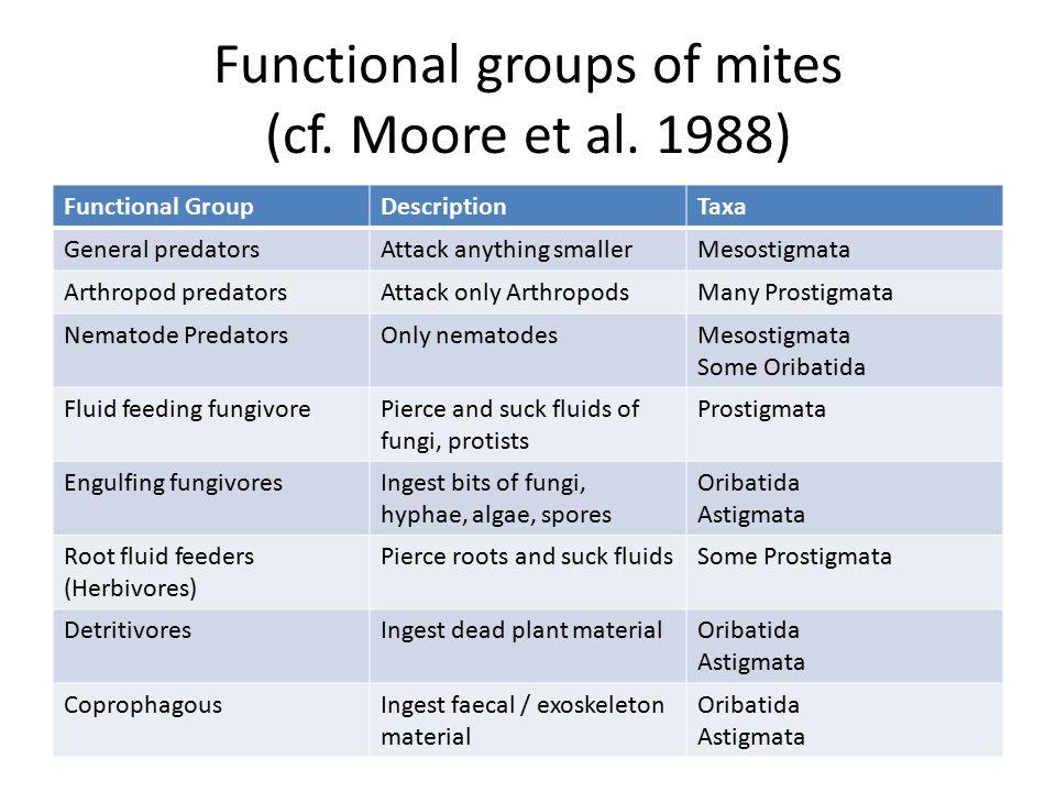 Functional groups of mites (cf. Moore et al.
