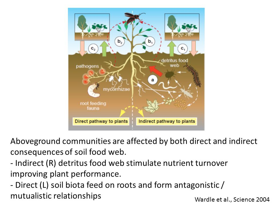 Aboveground communities are affected by both direct and indirect consequences of soil food web.