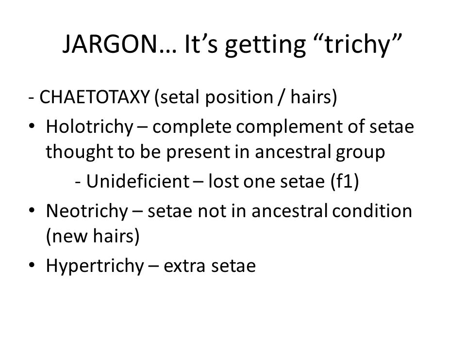 JARGON… It's getting trichy - CHAETOTAXY (setal position / hairs) Holotrichy – complete complement of setae thought to be present in ancestral group - Unideficient – lost one setae (f1) Neotrichy – setae not in ancestral condition (new hairs) Hypertrichy – extra setae