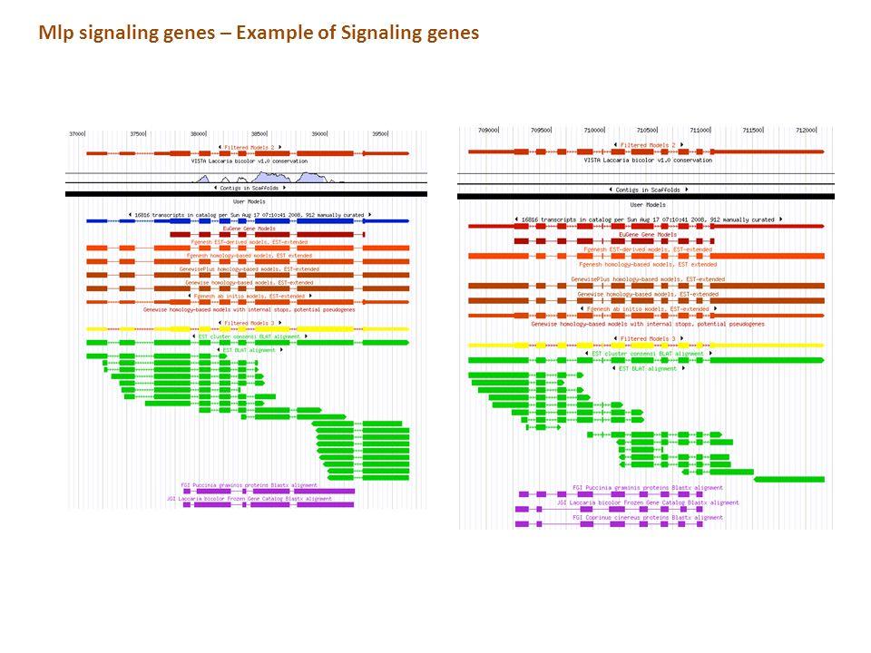 Mlp signaling genes – Example of Signaling genes