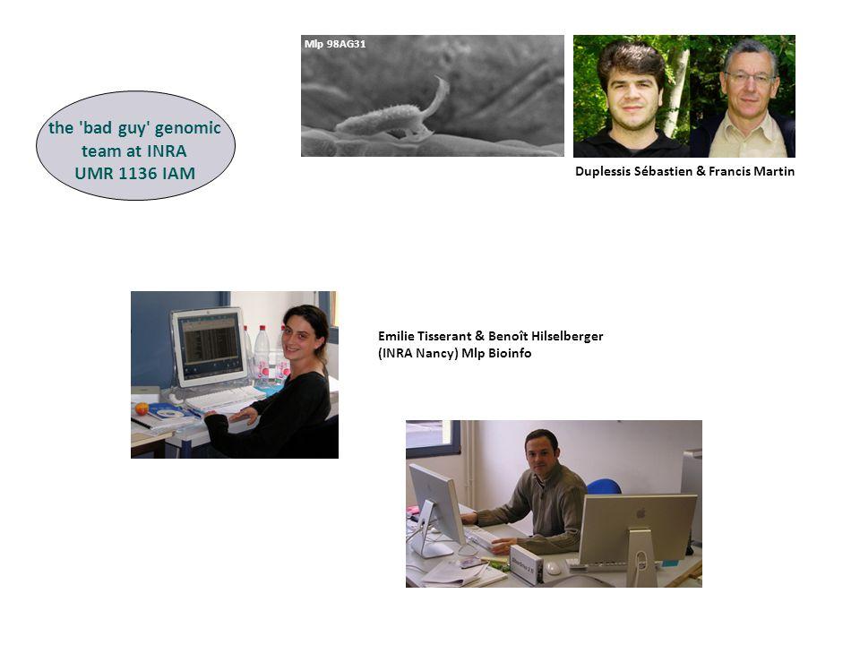 Emilie Tisserant & Benoît Hilselberger (INRA Nancy) Mlp Bioinfo Mlp 98AG31 the bad guy genomic team at INRA UMR 1136 IAM Duplessis Sébastien & Francis Martin