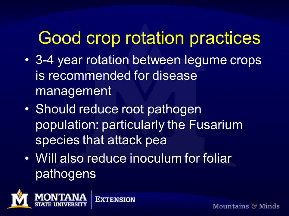 Good crop rotation practices 3-4 year rotation between legume crops is recommended for disease management Should reduce root pathogen population: part