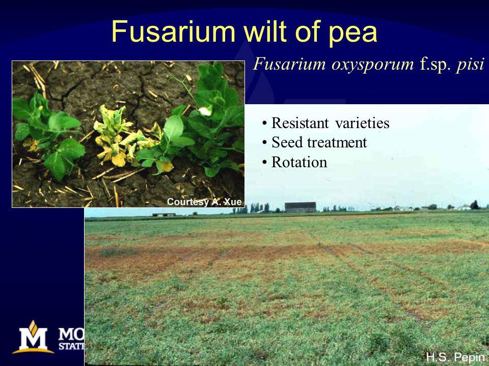 Fusarium wilt of pea Resistant varieties Seed treatment Rotation Fusarium oxysporum f.sp. pisi