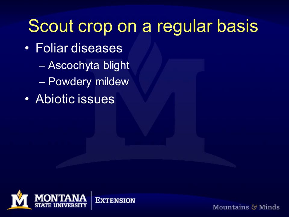 Scout crop on a regular basis Foliar diseases –Ascochyta blight –Powdery mildew Abiotic issues