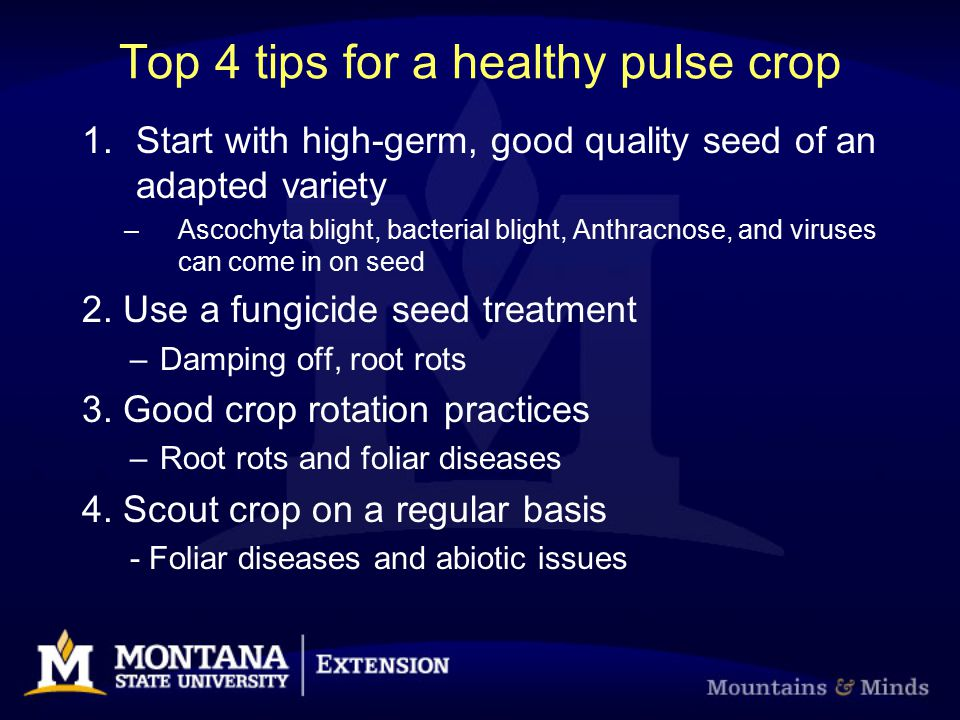 Top 4 tips for a healthy pulse crop 1.Start with high-germ, good quality seed of an adapted variety –Ascochyta blight, bacterial blight, Anthracnose,