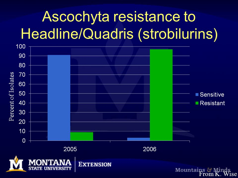 Ascochyta resistance to Headline/Quadris (strobilurins) Percent of Isolates From K. Wise