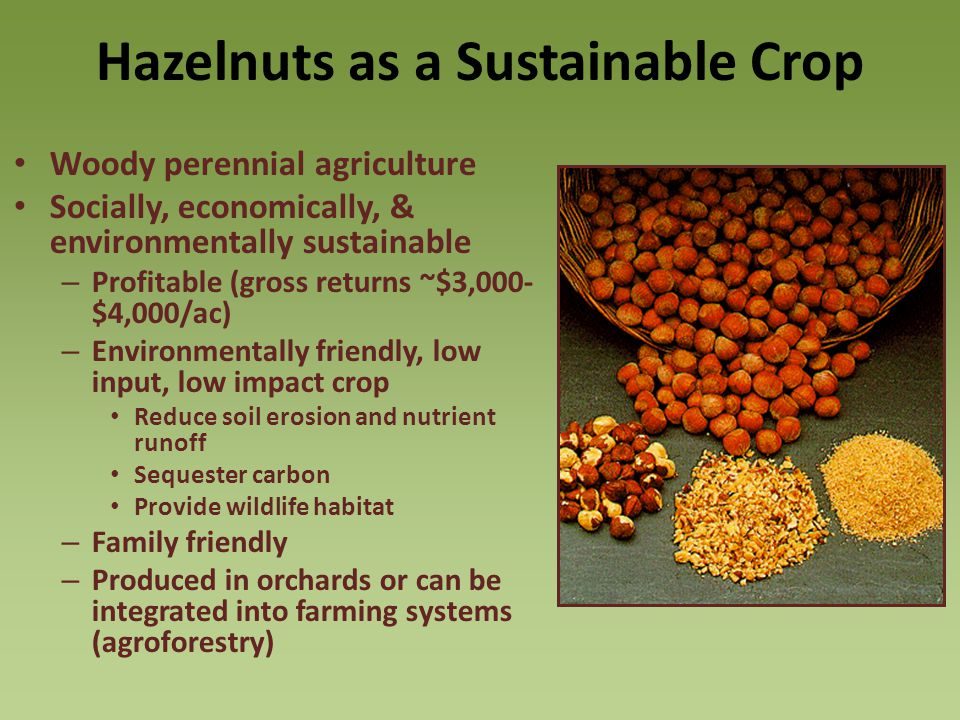 Hazelnuts as a Sustainable Crop Woody perennial agriculture Socially, economically, & environmentally sustainable – Profitable (gross returns ~$3,000- $4,000/ac) – Environmentally friendly, low input, low impact crop Reduce soil erosion and nutrient runoff Sequester carbon Provide wildlife habitat – Family friendly – Produced in orchards or can be integrated into farming systems (agroforestry)