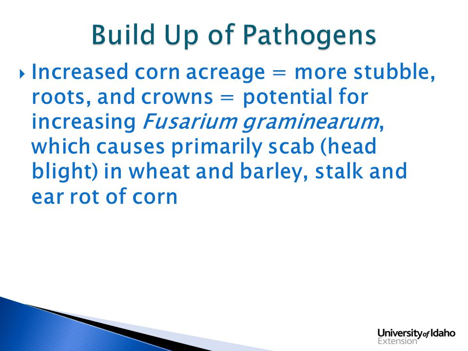  Increased corn acreage = more stubble, roots, and crowns = potential for increasing Fusarium graminearum, which causes primarily scab (head blight) in wheat and barley, stalk and ear rot of corn