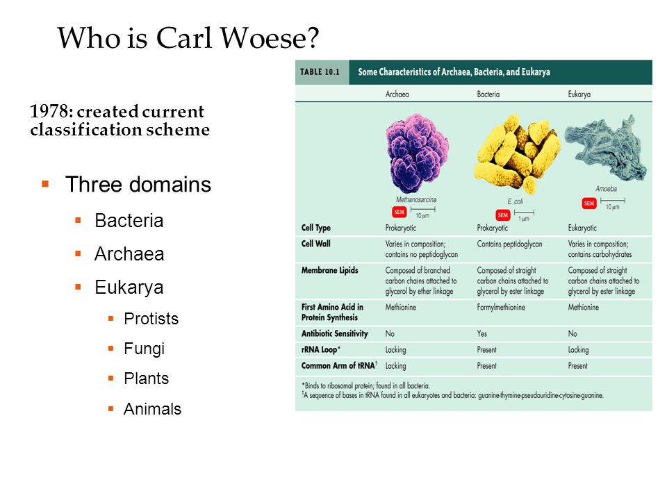 Who is Carl Woese.
