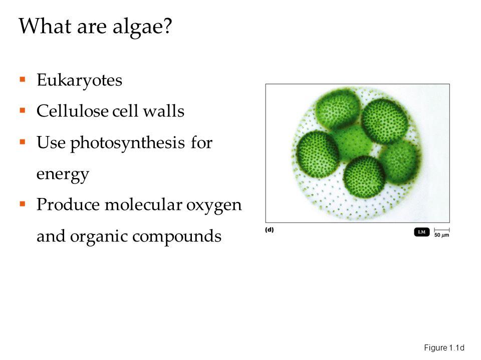 What are algae.