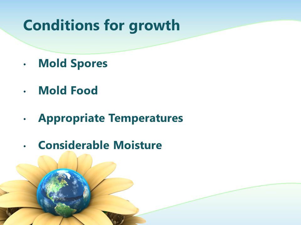 Conditions for growth Mold Spores Mold Food Appropriate Temperatures Considerable Moisture
