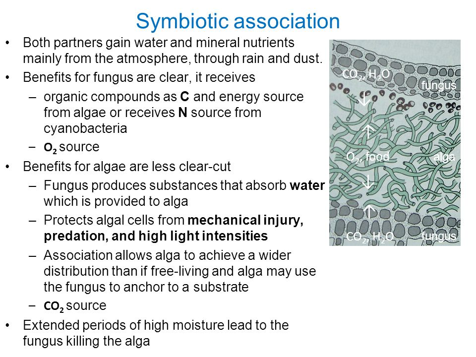 Symbiotic association Both partners gain water and mineral nutrients mainly from the atmosphere, through rain and dust.
