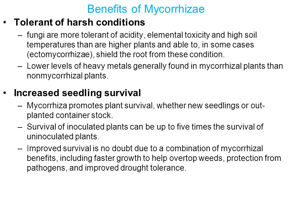 Benefits of Mycorrhizae Tolerant of harsh conditions –fungi are more tolerant of acidity, elemental toxicity and high soil temperatures than are higher plants and able to, in some cases (ectomycorrhizae), shield the root from these condition.