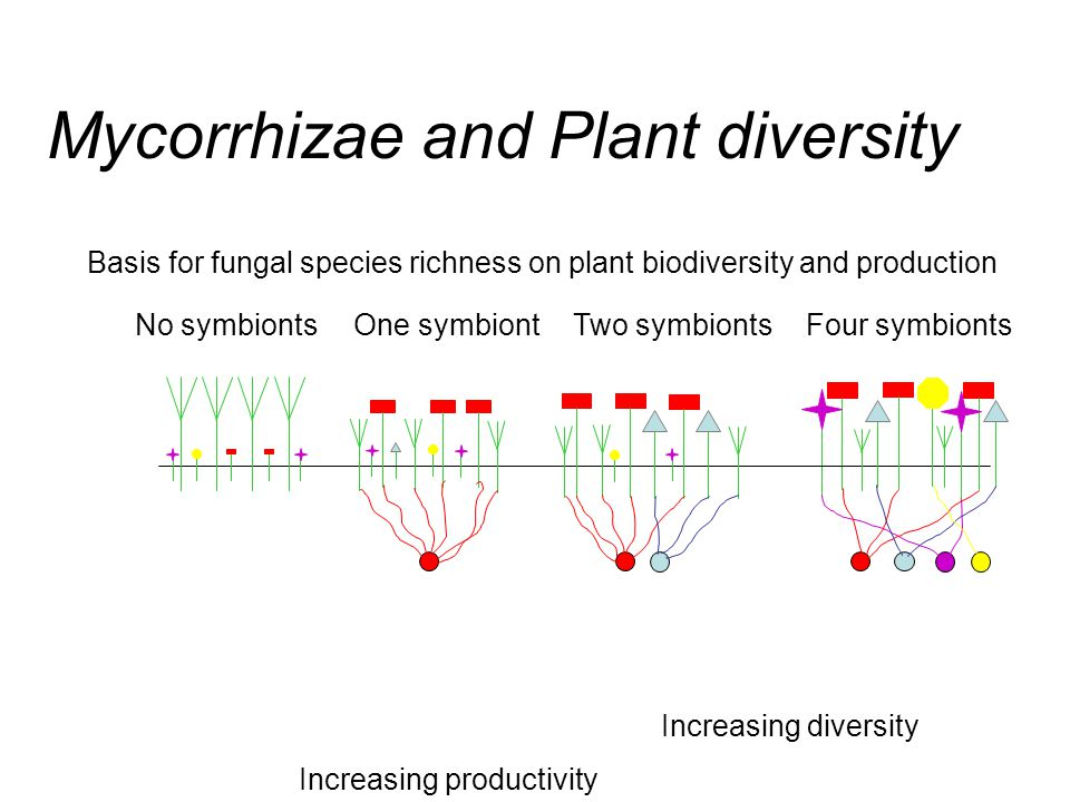 Basis for fungal species richness on plant biodiversity and production No symbiontsOne symbiontTwo symbiontsFour symbionts Increasing diversity Increa