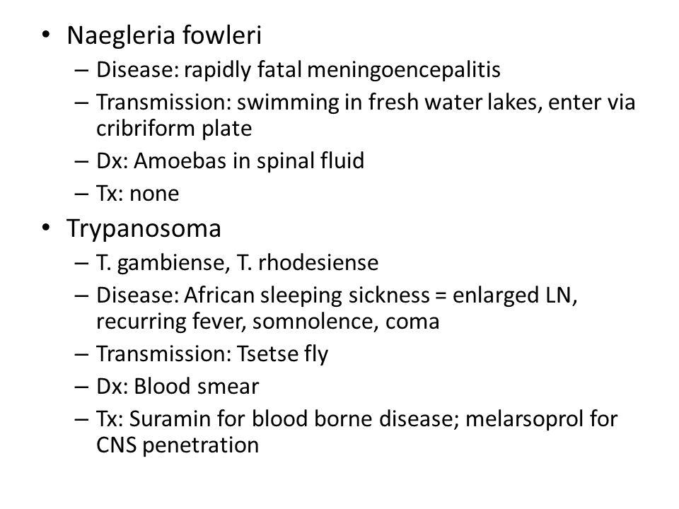 Naegleria fowleri – Disease: rapidly fatal meningoencepalitis – Transmission: swimming in fresh water lakes, enter via cribriform plate – Dx: Amoebas