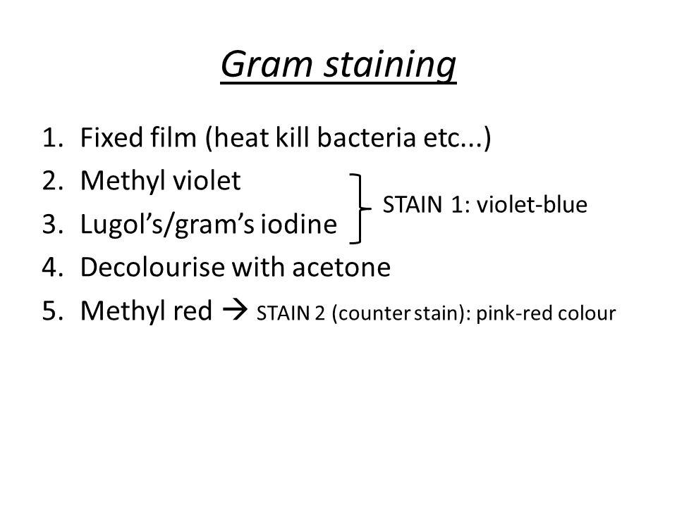 Pathogens to know.... Gram negative Neisseria (meningitidis and gonorrhoeae) Haemophilus influenzae E.