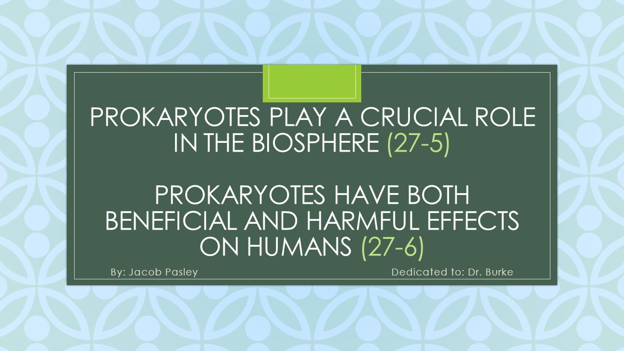 C PROKARYOTES PLAY A CRUCIAL ROLE IN THE BIOSPHERE (27-5) PROKARYOTES HAVE BOTH BENEFICIAL AND HARMFUL EFFECTS ON HUMANS (27-6) By: Jacob Pasley Dedic