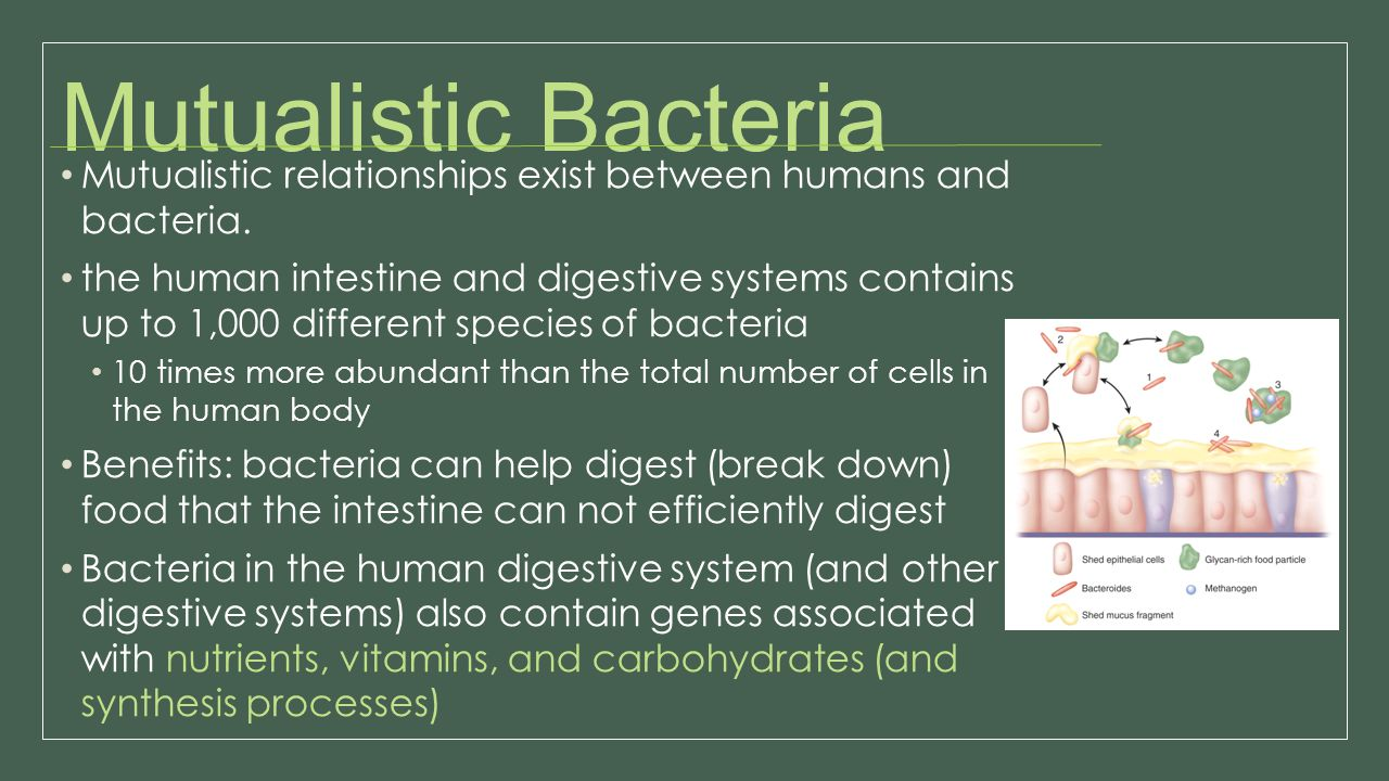 Mutualistic Bacteria Mutualistic relationships exist between humans and bacteria. the human intestine and digestive systems contains up to 1,000 diffe