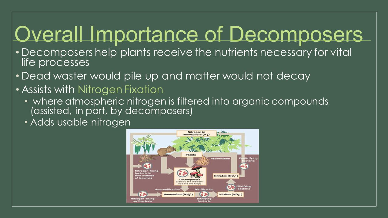 Overall Importance of Decomposers Decomposers help plants receive the nutrients necessary for vital life processes Dead waster would pile up and matte