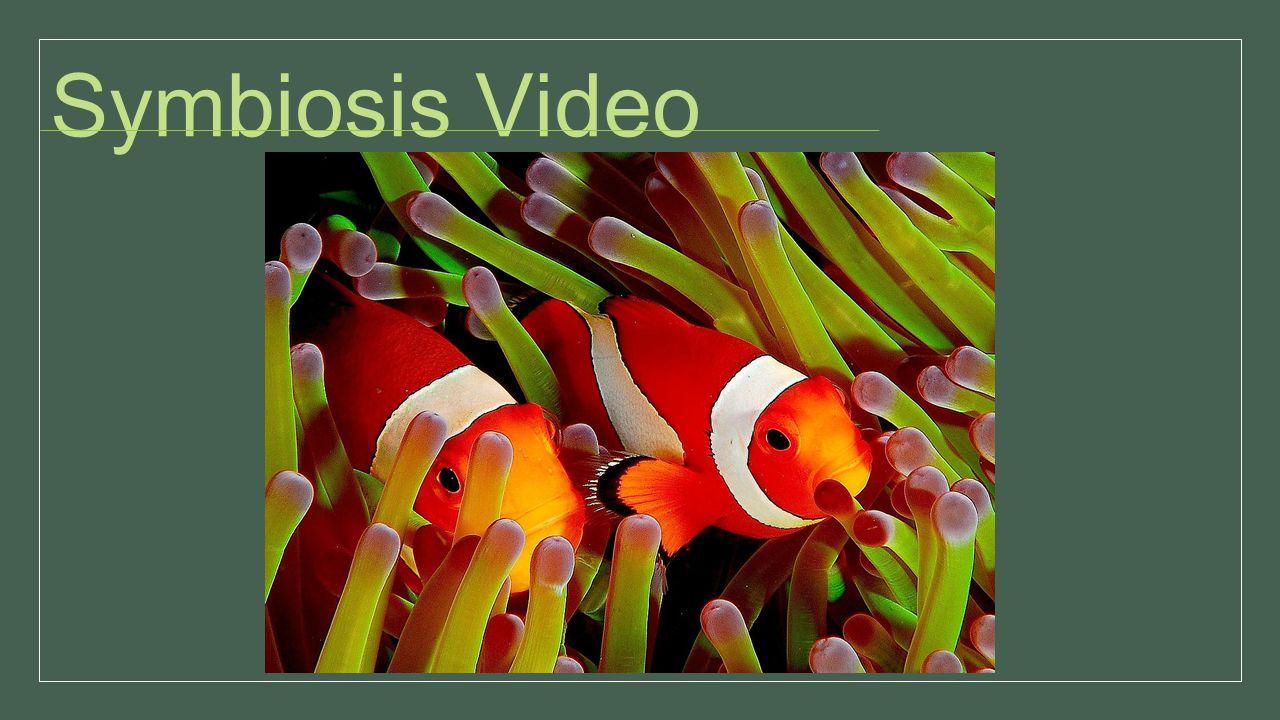 Symbiosis Video