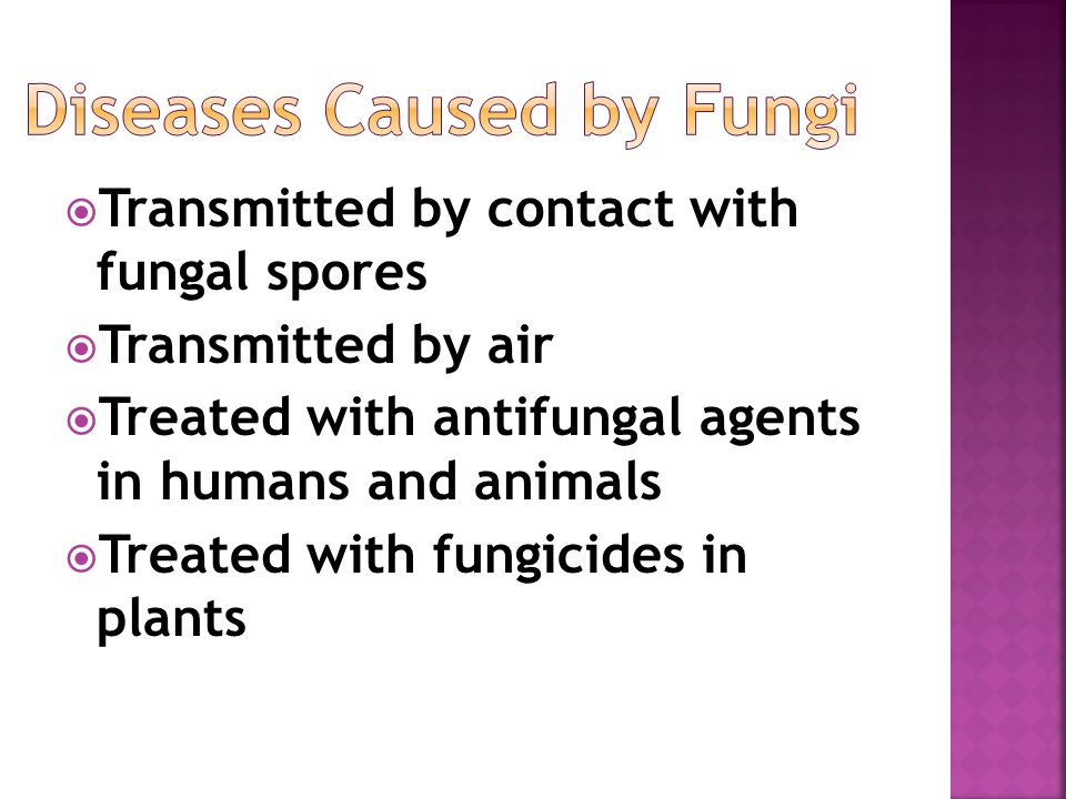  Transmitted by contact with fungal spores  Transmitted by air  Treated with antifungal agents in humans and animals  Treated with fungicides in plants