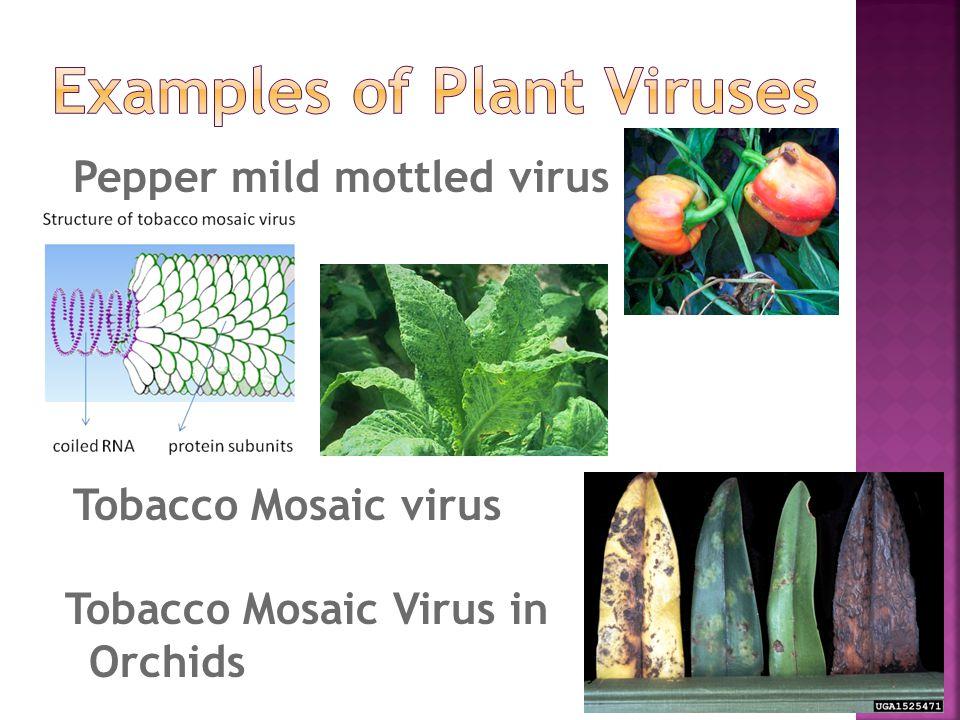 Pepper mild mottled virus Tobacco Mosaic virus Tobacco Mosaic Virus in Orchids