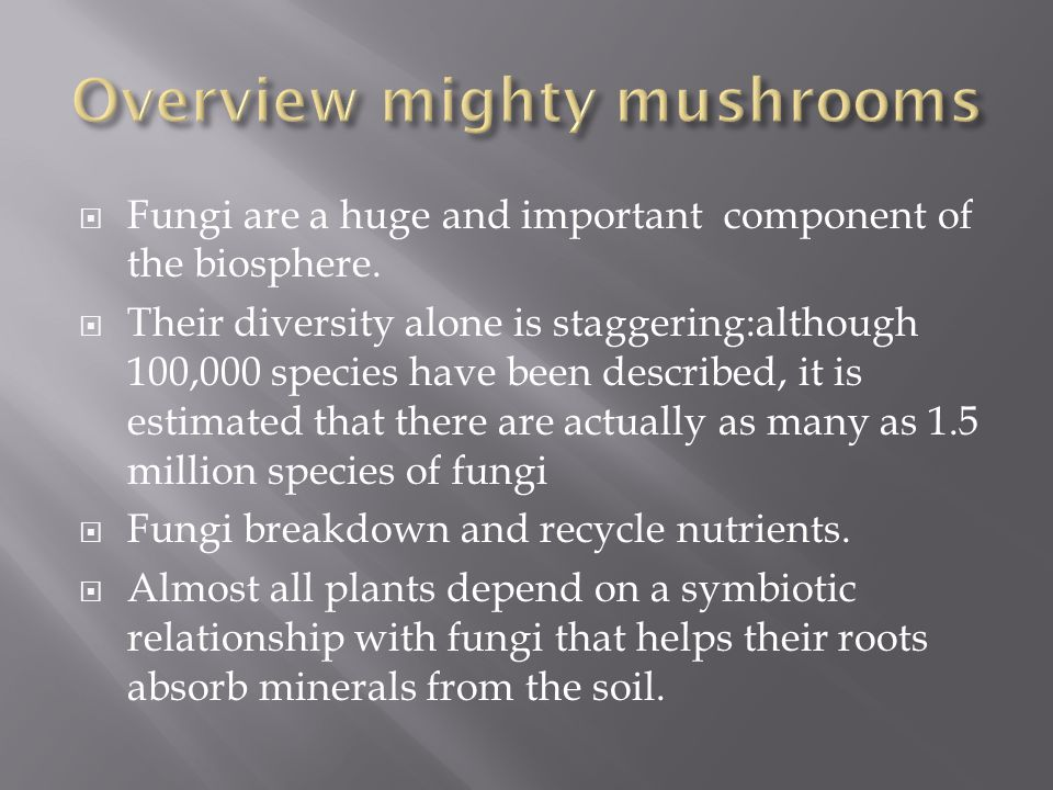  Approximtely 30,000 fungi,including mushrooms and shelf fungi,are called basidiomycetes and are classified in the phylum basidiomycota.