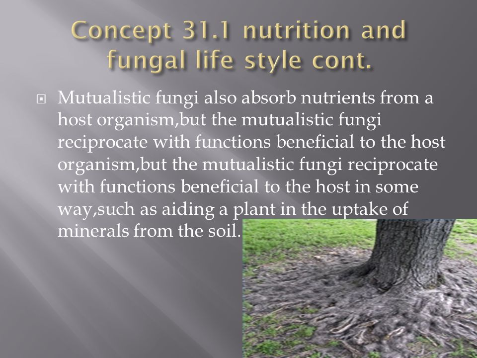  The danger posed by fungi should not overshadow the immense benefits we derive from these remarkable eukaryotes.