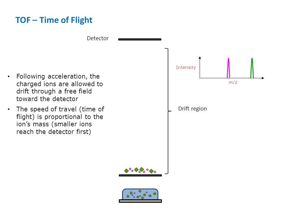 Drift region Detector TOF – Time of Flight m/z Intensity Following acceleration, the charged ions are allowed to drift through a free field toward the