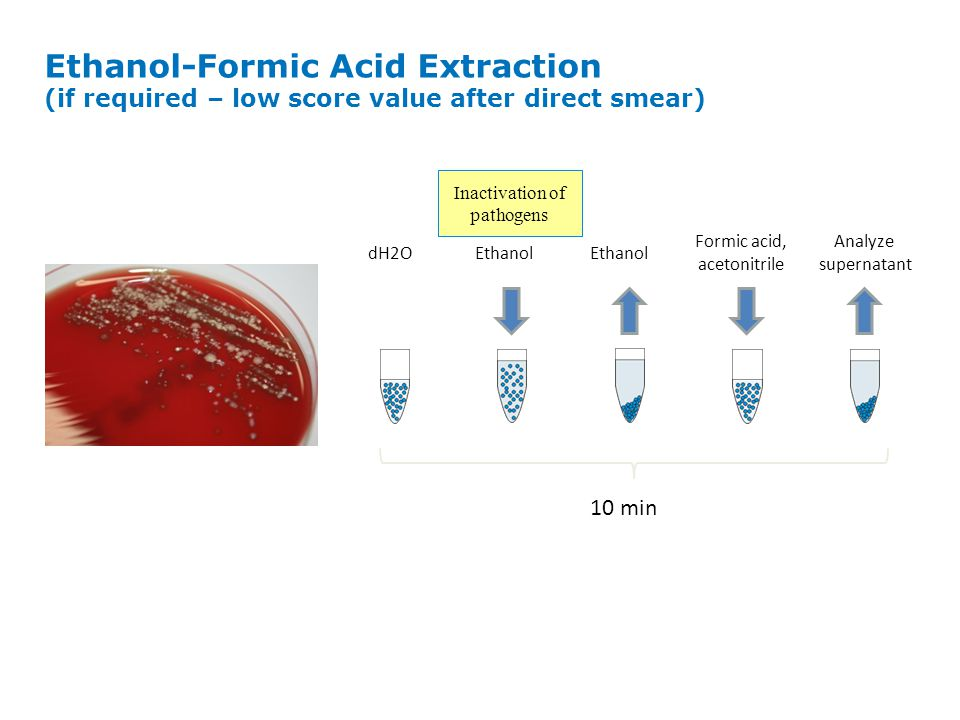 Target plate Analyte (organism) 1 µL Matrix Matrix Assisted Laser Desorption/Ionization Matrix: HCCA (  -Cyano-4-hydroxycinnamic acid) Solvent: Acetonitrile, TFA (trifluoroacetic acid) Lyses cell walls and extract protein Separates protein molecules (proteins are sticky ) Research use only – not for use in diagnostic procedures