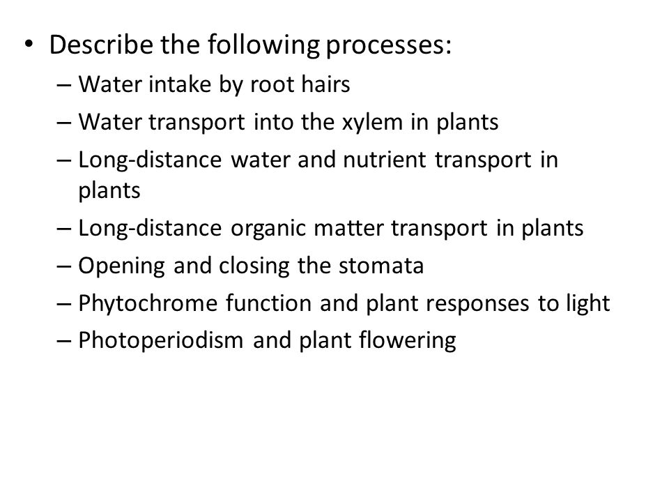 Describe the following processes: – Water intake by root hairs – Water transport into the xylem in plants – Long-distance water and nutrient transport in plants – Long-distance organic matter transport in plants – Opening and closing the stomata – Phytochrome function and plant responses to light – Photoperiodism and plant flowering