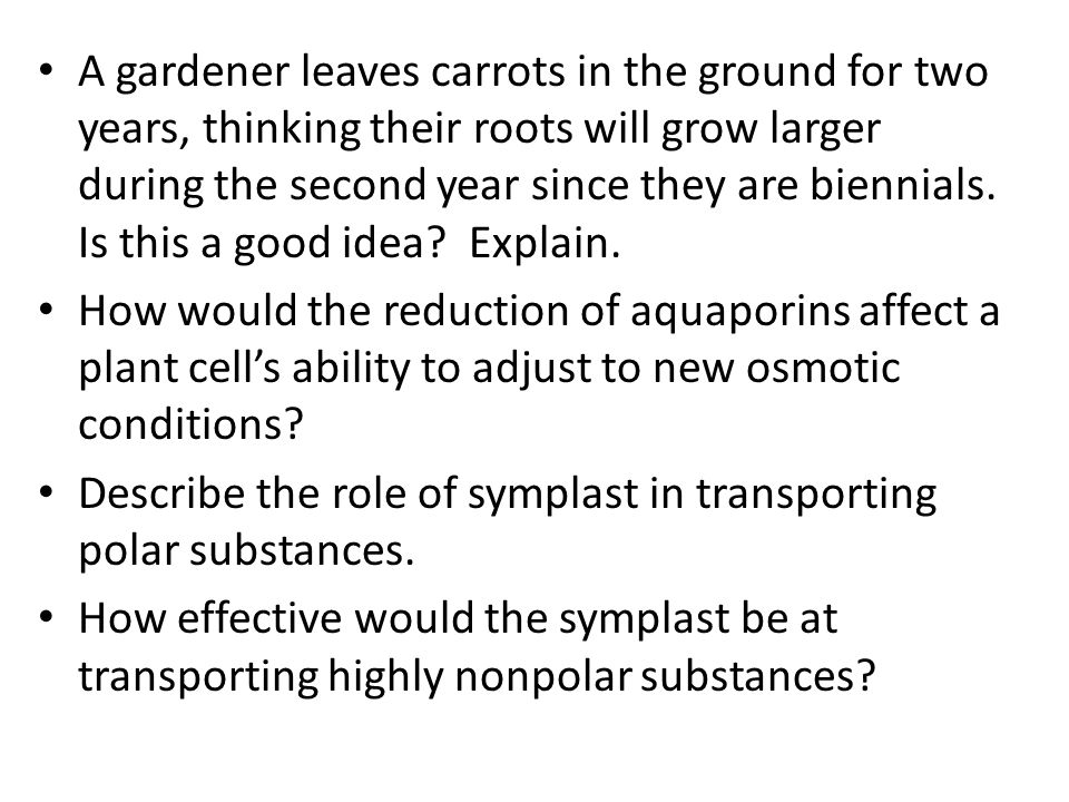 A gardener leaves carrots in the ground for two years, thinking their roots will grow larger during the second year since they are biennials.