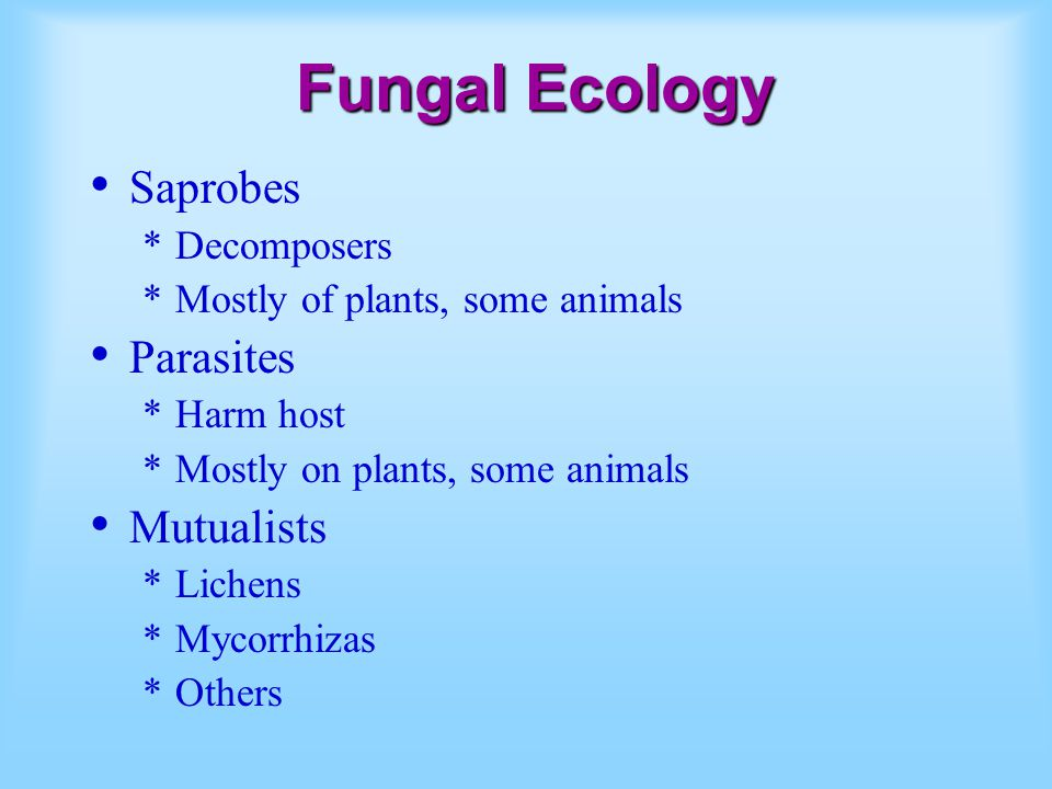 Fungal Ecology Saprobes *Decomposers *Mostly of plants, some animals Parasites *Harm host *Mostly on plants, some animals Mutualists *Lichens *Mycorrhizas *Others