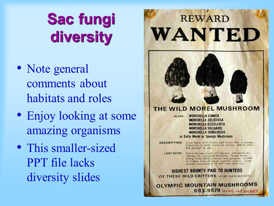 Sac fungi diversity Note general comments about habitats and roles Enjoy looking at some amazing organisms This smaller-sized PPT file lacks diversity
