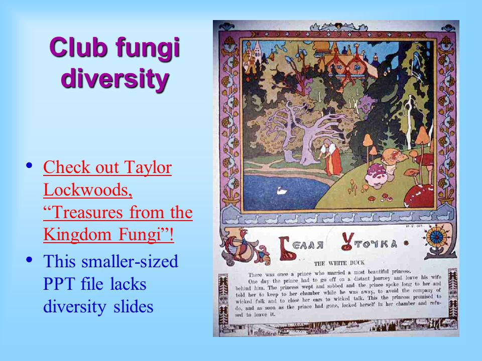 Club fungi diversity Check out Taylor Lockwoods, Treasures from the Kingdom Fungi .