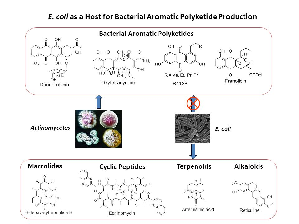 E.coli as a Host for Bacterial Aromatic Polyketide Production Bacterial Aromatic Polyketides E.