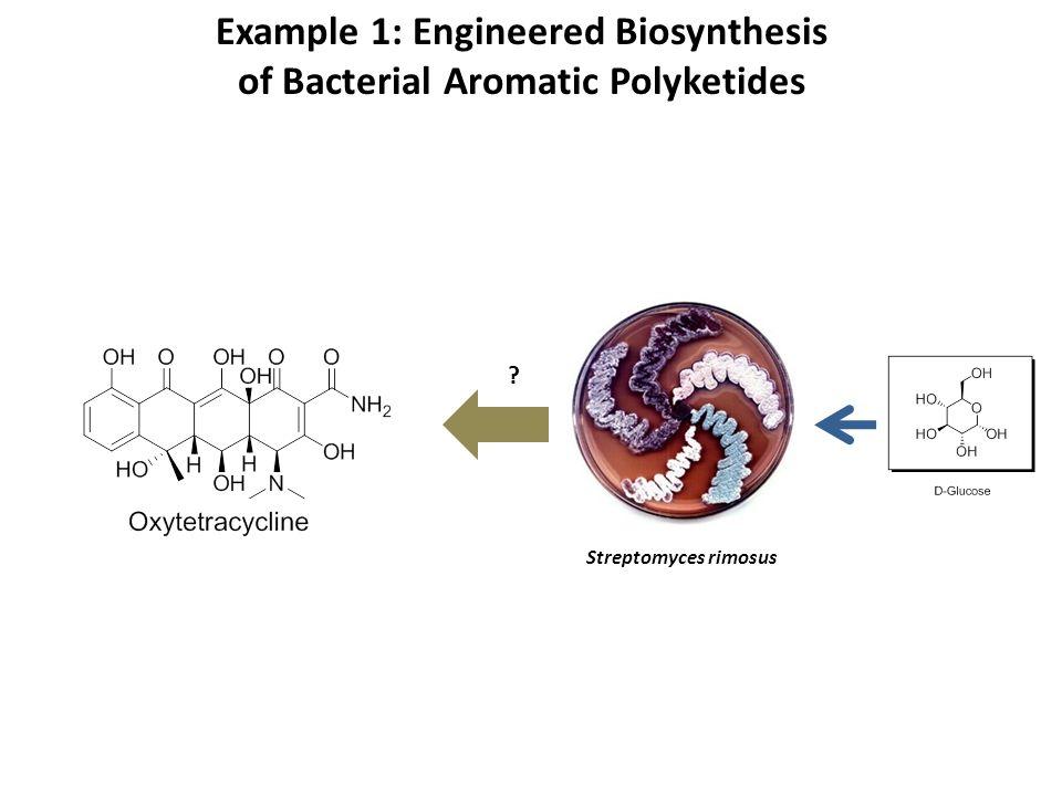 Example 1: Engineered Biosynthesis of Bacterial Aromatic Polyketides ? Streptomyces rimosus