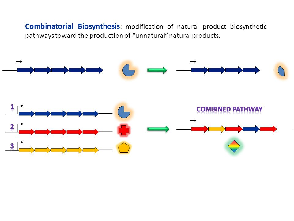 """Combinatorial Biosynthesis : modification of natural product biosynthetic pathways toward the production of """"unnatural"""" natural products."""