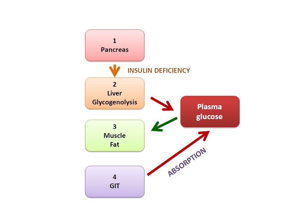 3 Muscle Fat 3 Muscle Fat 2 Liver Glycogenolysis 2 Liver Glycogenolysis 1 Pancreas 1 Pancreas 4 GIT 4 GIT Plasma glucose INSULIN DEFICIENCY ABSORPTION