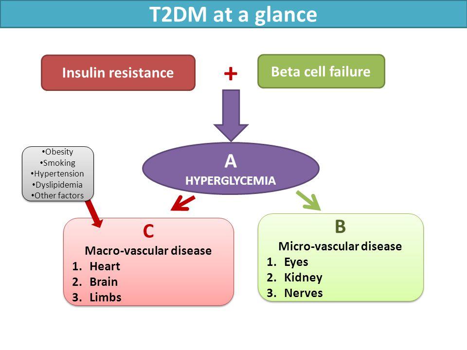 Insulin resistance Beta cell failure C Macro-vascular disease 1.Heart 2.Brain 3.Limbs C Macro-vascular disease 1.Heart 2.Brain 3.Limbs B Micro-vascular disease 1.Eyes 2.Kidney 3.Nerves B Micro-vascular disease 1.Eyes 2.Kidney 3.Nerves A HYPERGLYCEMIA T2DM at a glance + Obesity Smoking Hypertension Dyslipidemia Other factors Obesity Smoking Hypertension Dyslipidemia Other factors