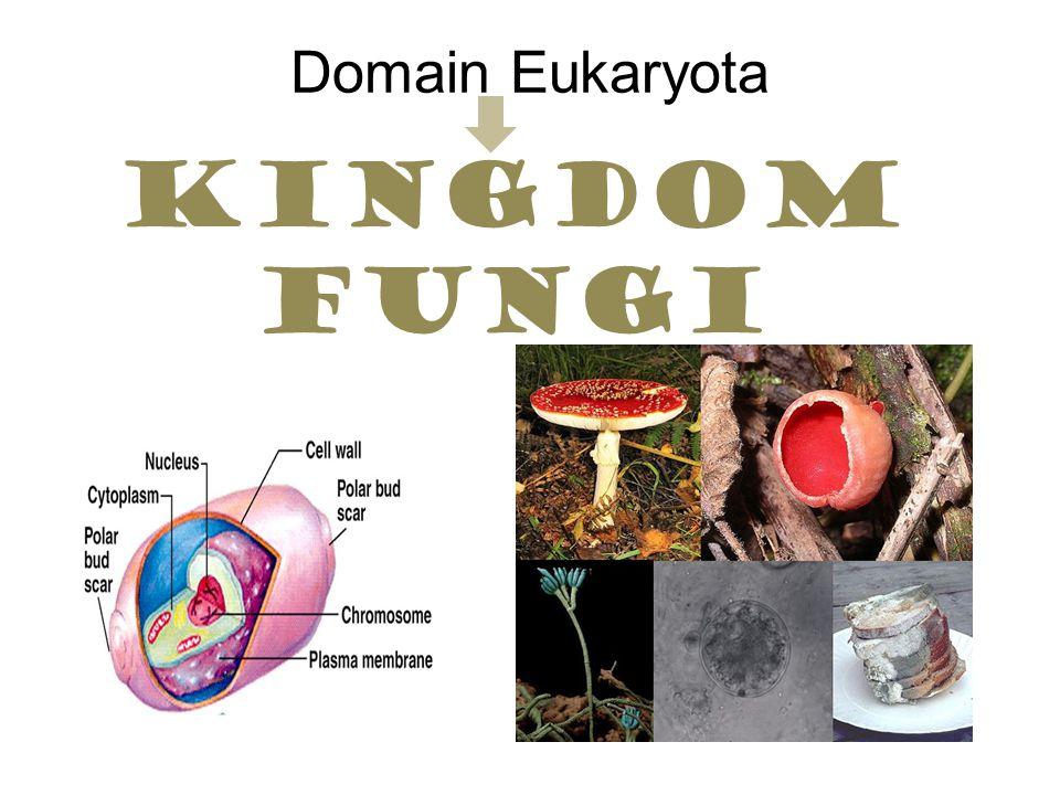 Domain Eukaryota Kingdom fungi