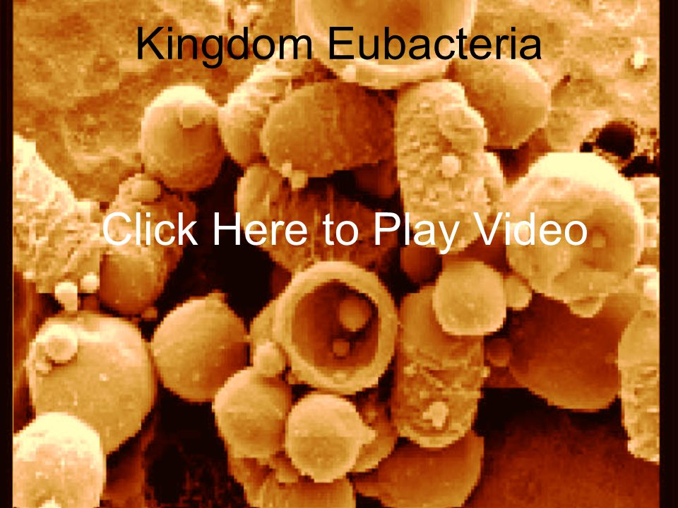 Kingdom Eubacteria Click Here to Play Video