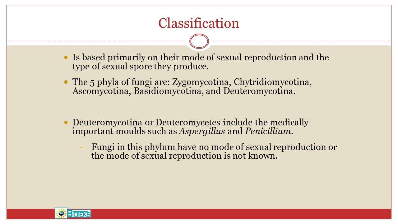 Classification Is based primarily on their mode of sexual reproduction and the type of sexual spore they produce. The 5 phyla of fungi are: Zygomycoti