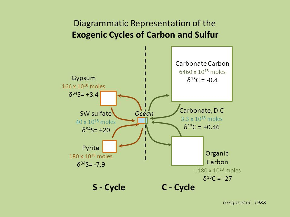 Diagrammatic Representation of the Exogenic Cycles of Carbon and Sulfur S - CycleC - Cycle Car Carbonate Carbon 6460 x 10 18 moles δ 13 C = -0.4 Organic Carbon 1180 x 10 18 moles δ 13 C = -27 Gypsum 166 x 10 18 moles δ 34 S= +8.4 Pyrite 180 x 10 18 moles δ 34 S= -7.9 Carbonate, DIC 3.3 x 10 18 moles δ 13 C = +0.46 SW sulfate 40 x 10 18 moles δ 34 S= +20 Ocean Gregor et al..