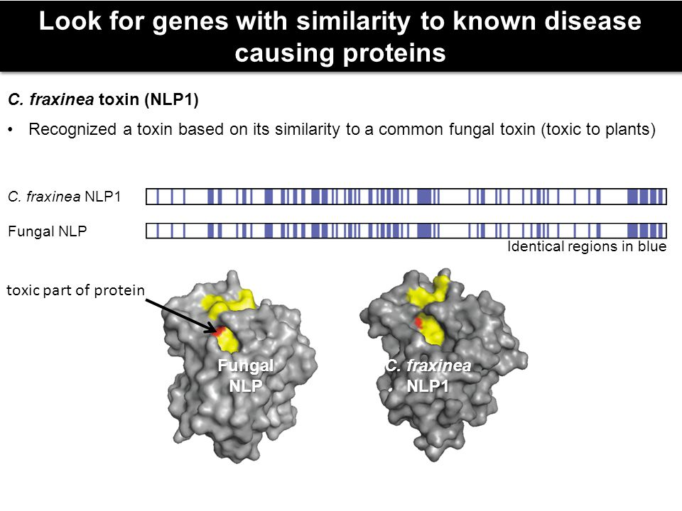 Look for genes with similarity to known disease causing proteins C.