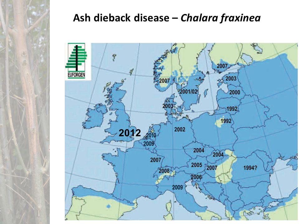 Ash dieback disease – Chalara fraxinea 2012