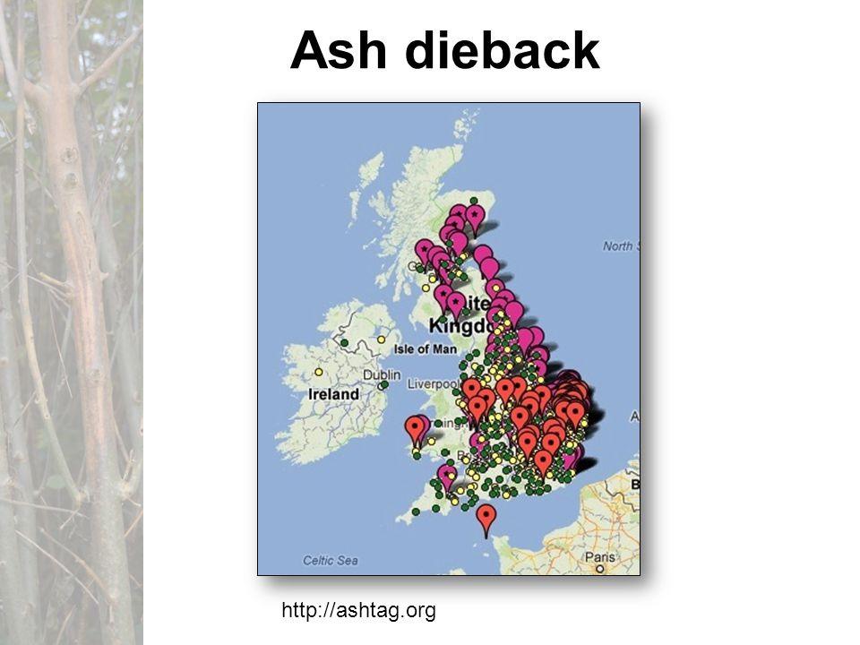 Ash dieback http://ashtag.org